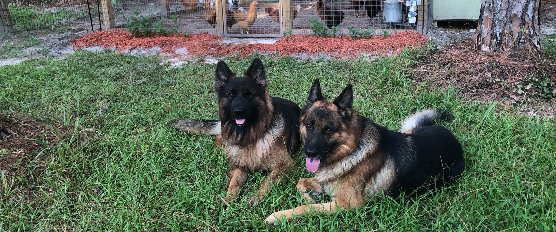 Dog Trainers Clearwater
