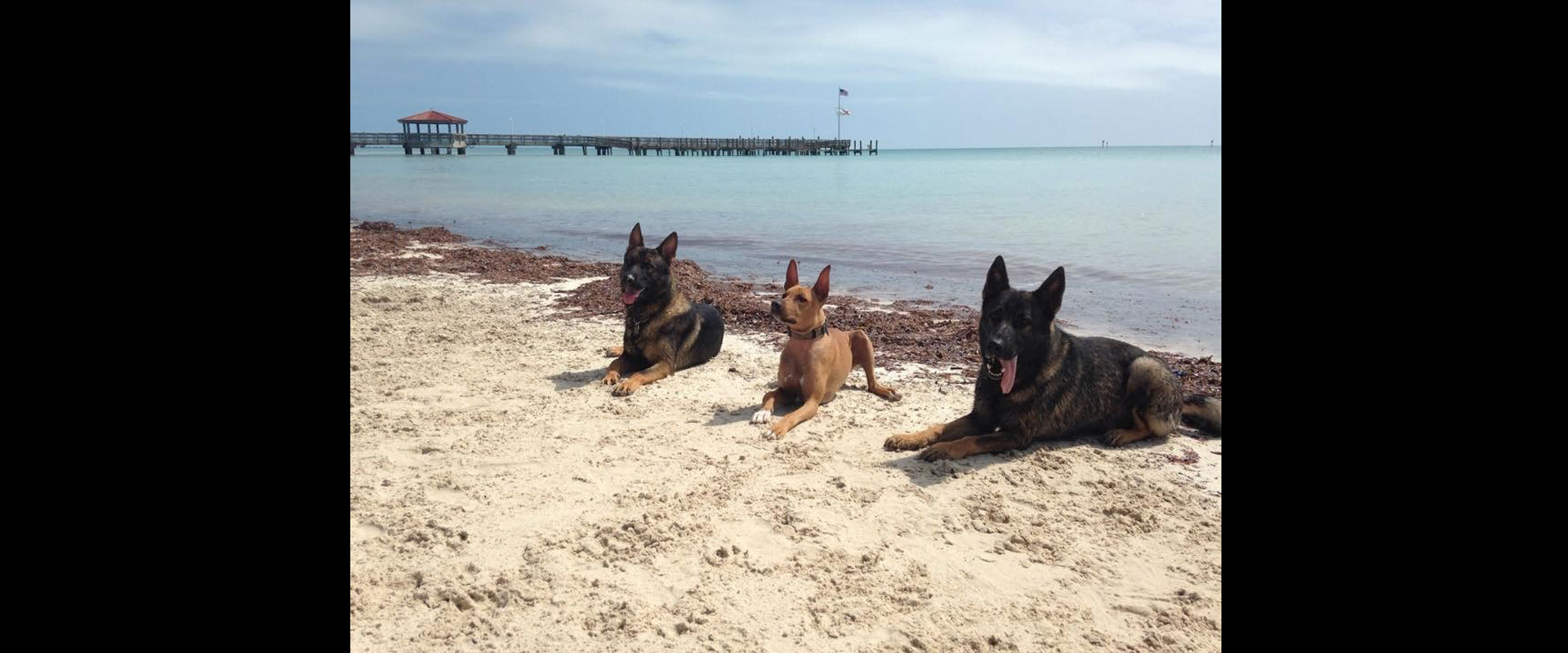 Dog Training at the Beach